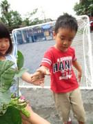 7月10日(金)枝豆の収穫をしました。