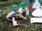 10月4日芋掘りへ。