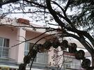4月6日 桜が少し咲き始めました。