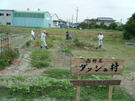 6月21日 南新屋「ダッシュ村」でお芋掘りを楽しみました。